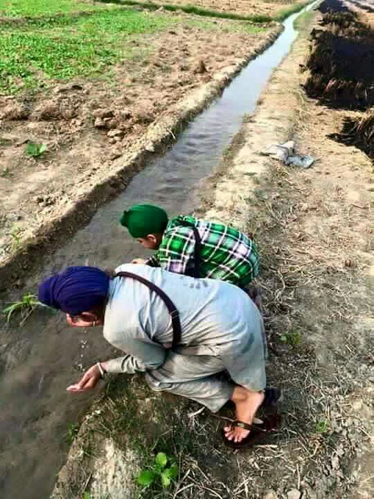 Punjab farms