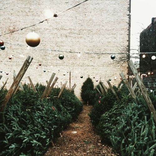 Christmas in Chicago (at Printer's Row Historic District) || @agentlewoman on instagram