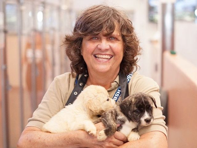 As You May Have Already Seen In Our Feed It S National Volunteerappreciationweek The Humane Society O Animal Shelter Volunteer Animal Shelter Humane Society