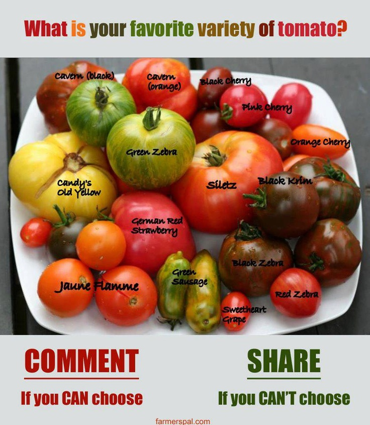 Different Types Of Tomatoes Tomatoes Pinterest 400 x 300