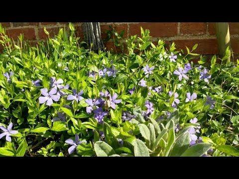 #Gardeners Weekend #weather update! Featured garden: Yewbarrow House Gar...