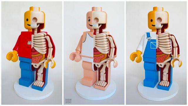 What lies beneath: Lego Men, Men Dissect, Stuff, Jason Freeni, Lego Sculpture, Jasonfreeni, Lego Anatomy, Anatomical Lego, Dissect Lego