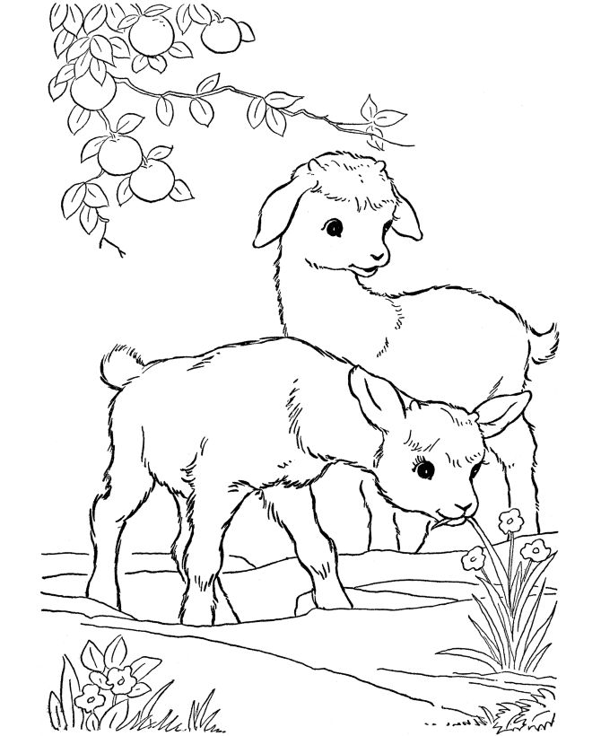 image detail for farm animal coloring pages printable kid goats coloring page and - Free Printable Coloring Pages For Kids Animals