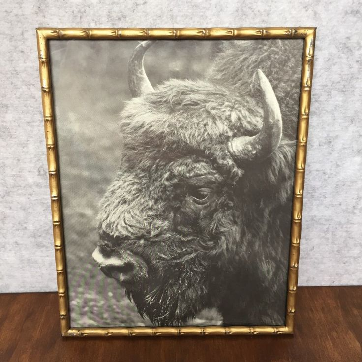 VINTAGE GOLD FRAMED BISON PRINT - $25 AUD  This black and white vintage print of a bison comes in a gold metal 'bamboo' shaped frame with stand.  He looks so pensive and wise, don't you think?
