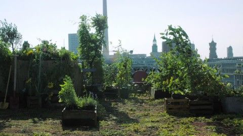 Herbs Garden, Fruit and Vegetable Garden, Roof Deck, Horticulture, Planting, Olericulture, Opposite, Urban Culture, Vegetables, Cultivation, Vegetation, Lifestyle (Concept), Wind, Large City, Building (Edifice), No People, Sunshine, Day,
