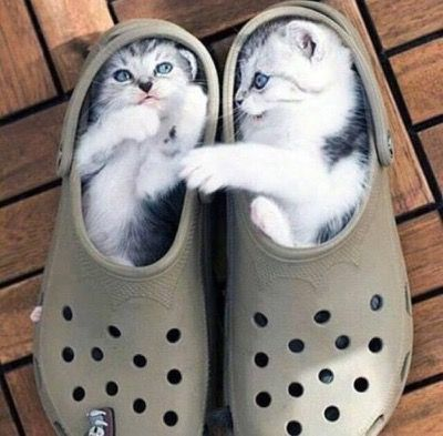 "Kitten in the Right: ""What shoe up to?"" Kitten on the left: ""Stuck…ain't that a crock!"""
