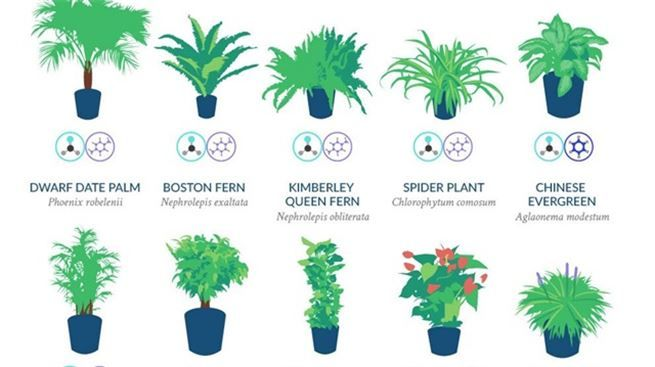 NASA, evinizde temiz hava sağlayacak 13 bitkiyi açıkladı