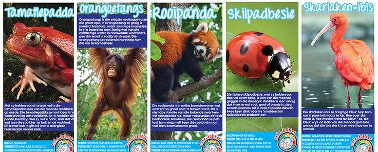 Afrikaanse taakhulp: Rooidiere Speelkaarte. Orangoetangs. Rooipanda. Skarlaken-ibis. Skilpadbesie. Tamatiepadda. Diere. Hoezit. Animals.