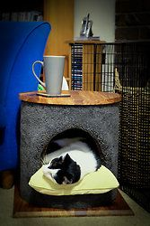 Cat Beds photo - Valley Craftsman
