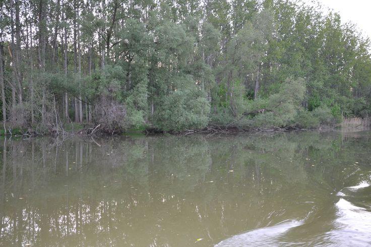 Staré rameno rieky Dunaj - Bodíky Slovensko The old arm of the river Danube - Bodíky Slovakia