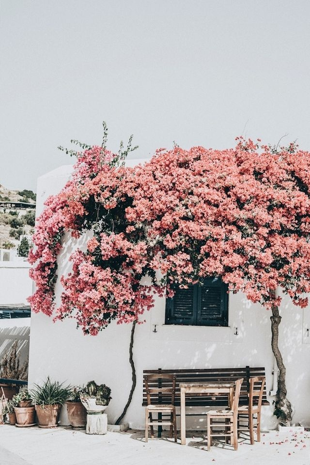A little weekend inspiration … flower-covered cottage on the Island of Paros, pretty pink laser-cut top, a delicious Tres Leches cake, and an idyllic cafe in Mykonos … xo debra 1 by days of camille, 2