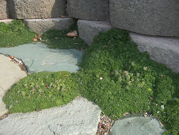 Dog-Friendly Ground Covers, Grasses & Backyard Solutions | INSTALL-IT-DIRECT