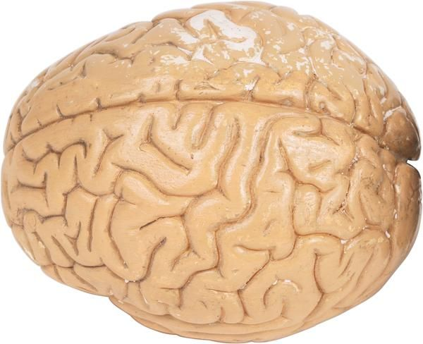 an analysis of the functions of the four major lobes of the brain What are the four lobes of the brain what are their functions  how can we increase power in the side lobes and reduce it in the main lobes  what is the .