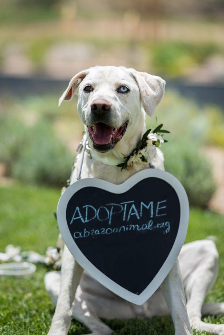 Reportaje de fotos con temática bodas con el fin de dar en adopción las mascotas protagonistas de esta sesión. ¡No compres, adopta!