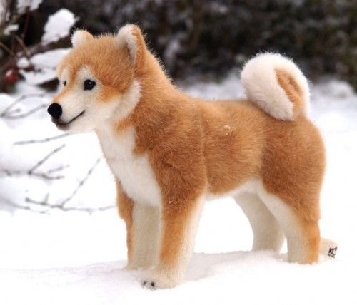 Shiba Inu: Inu Puppies, Shiba Inu, Dogs Animal, Cutest Dogs, Pet,  Chow Chow, Stuffed Animal, Kösen Shibainu, Animal Shiba
