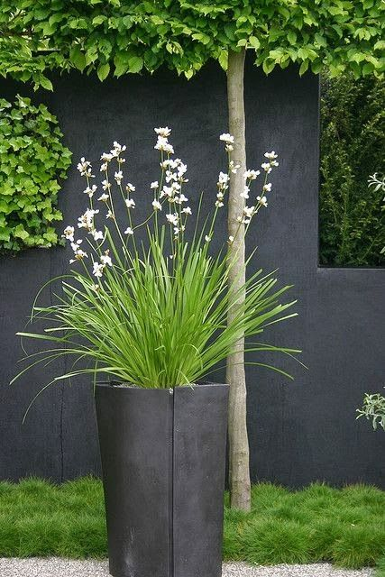Beautiful Planter | Outdoor Area