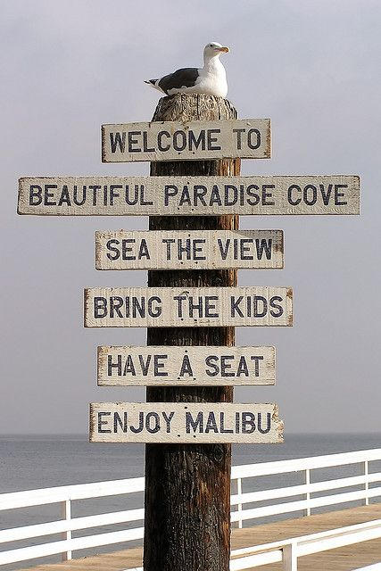 Seagull on Malibu sign at pier | Flickr - Photo Sharing!