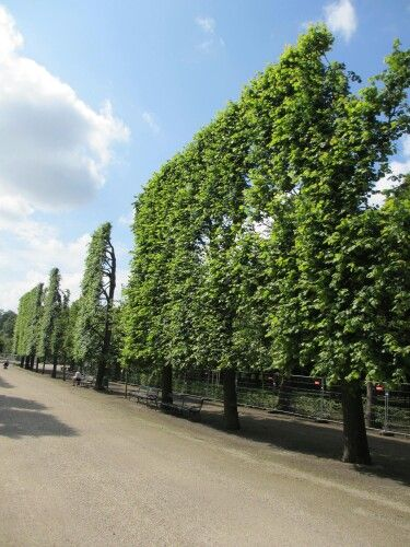 Vienna, Schronbrunn Palace. Check out how they prune their hedge.