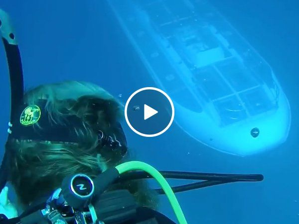 Divers catch glimpse of uncommon and shy oceanic creature referred to as a Submarine (Video)