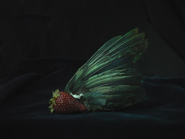 Tui Wing and Organic Strawberry - Fiona Pardington.