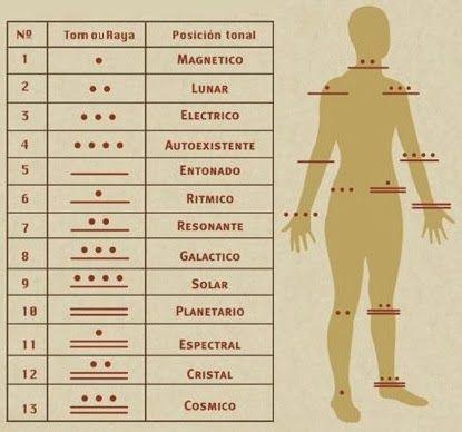 Sistematizando o estudo do Kin maya, as Ondas Encantadas, os Tonos e os Selos