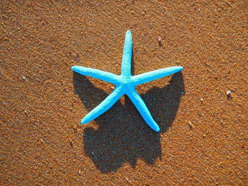 StarfishSands, Pink Summer, Life,  Sea Stars, Blue Starfish, Summer Lovin, Beach, Lights Baby Blue, Blog