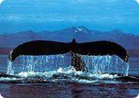 Baleine Tadoussac Québec