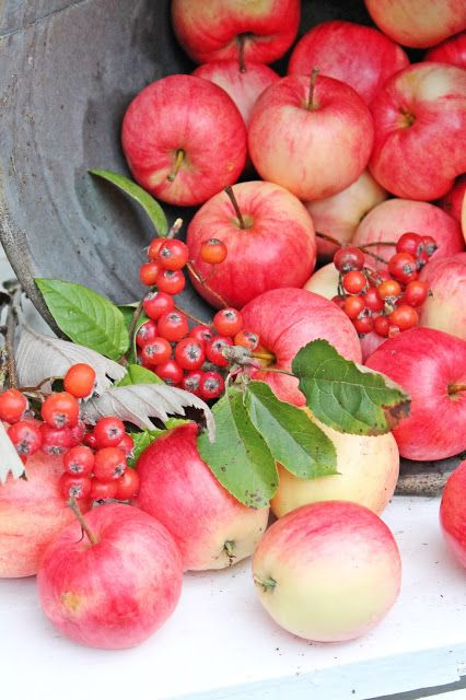 Shades of pinks Apples