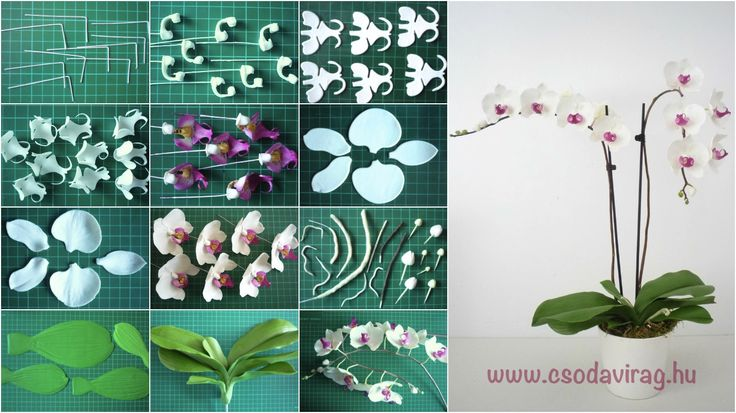 Phalaenopsis - Lepkeorchidea https://www.facebook.com/Csodavirag