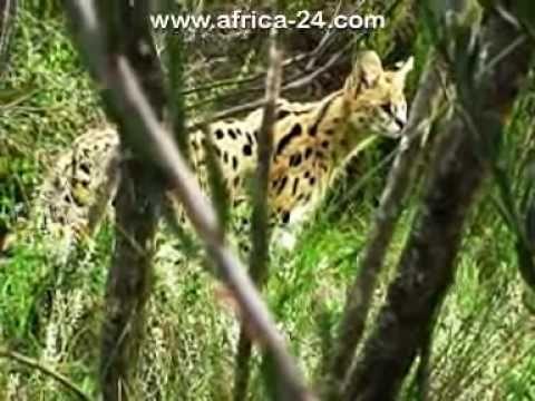 Our Tenikwa Video..... :)