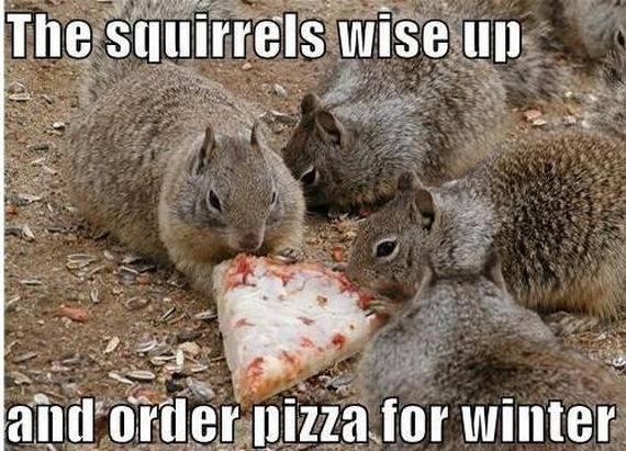 Cute Animals With Funny Captions   compilation of cute animal photos with funny captions.