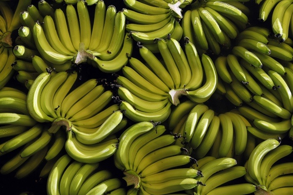 enough said.: Food Recipes, Bananas Food, Good Ideas, Bananas Cans T, Threaten Fruit, Bananas Supplynbc, Fungus Threaten, Bananas Supplies Nbc, Threaten Bananas