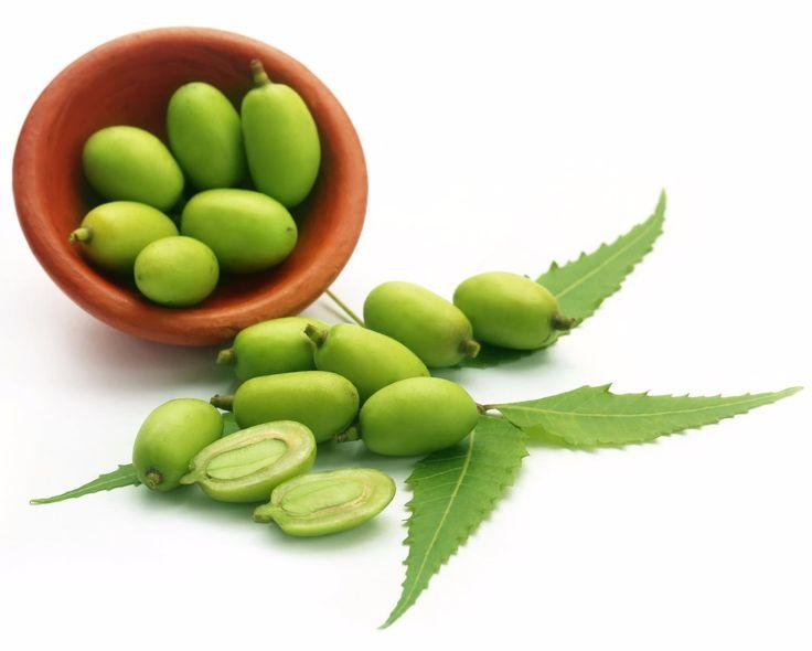 SOUND: https://www.ruspeach.com/en/news/14226/     Ним известен также под названием Маргоза. Это лечебное тропическое древесное растение, которое растет в Пакистане, Бангладеш, Индии и Мьянме. В Индии это растение известно под названиями «деревенская аптека», «божественное дерево» и «панацея от всех болезней». Ним известен как природный очиститель крови и помощник от многих болезней.    Neem is known also under the name Margoza. This is a medical tropical wood plant which gro