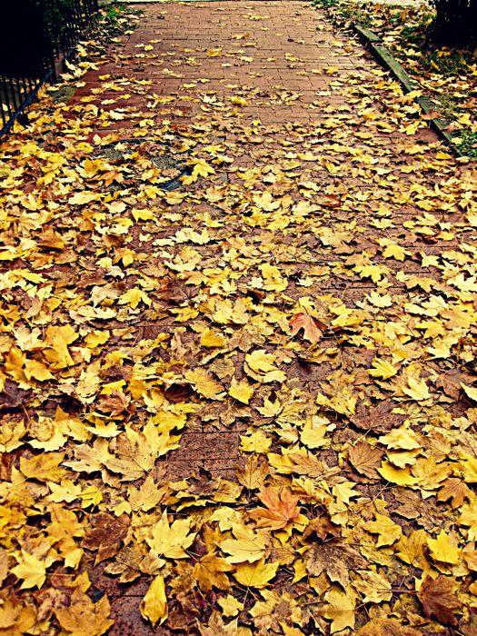 rockstar diaries: Style, Gorgeous Leaves, Rockstar Diaries