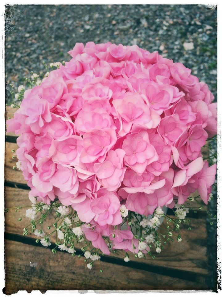 Pink Hydrangeas and Gypsophila 💕