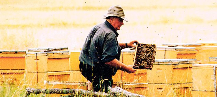 Australian beekeeping standards are among the highest in the world.