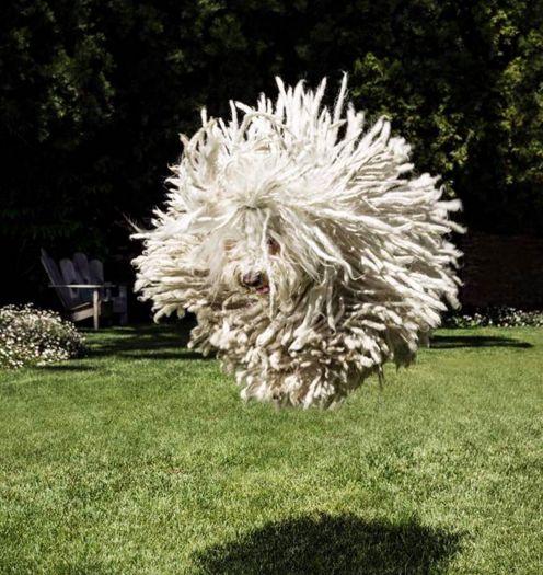 Mark Zuckerburg's adorable dog