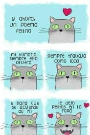 poema de un gato
