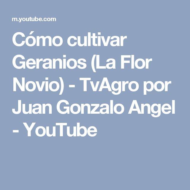 Cómo cultivar Geranios (La Flor Novio) - TvAgro por Juan Gonzalo Angel - YouTube