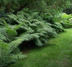 Ostrich Fern and grass - this looks like a very stylish but easy to achieve combo.