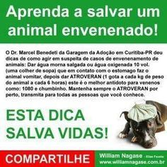 Dicas para salvar seu animal de estimação contra envenenamento