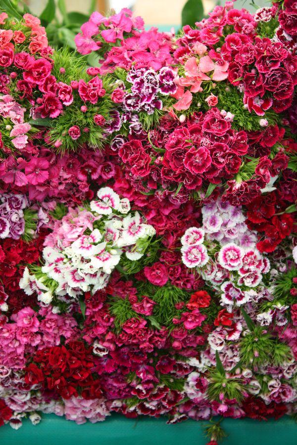 flowers ~ marvelous markets of Paris, France