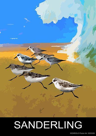 Sanderling by MomboloArt