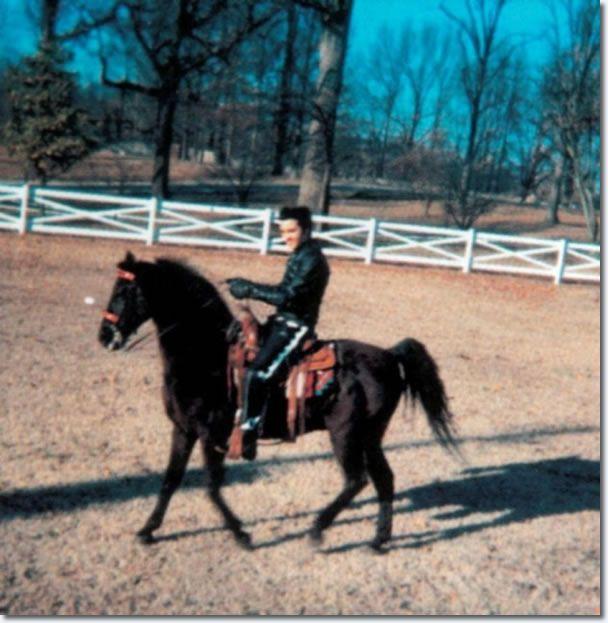 Elvis Presley : Horseback riding at Graceland : February 9, 1968