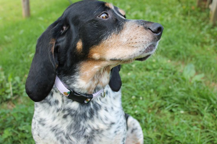 The Southern Hound Co Offers Handcrafted Dog Accessories Https