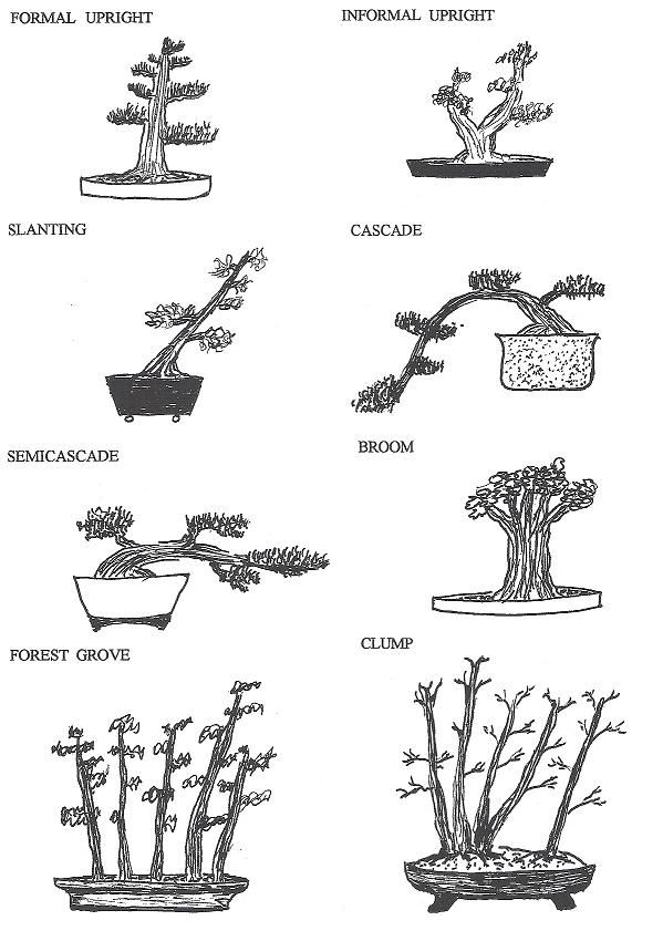 17 best images about bonsai making on pinterest