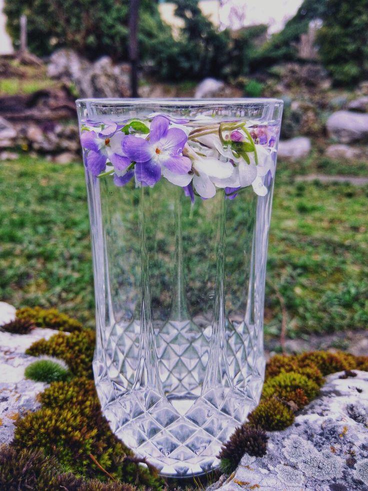 Poznáte fialkovú vodu? Ak nie, určite vyskúšajte, lebo si ju zamilujete ❤  Páni Baklažáni vám prajú Veselú Veľkú noc!  A ak by ste mali chuť a čas prečítať si niečo veľmi zaujímavé o vode, dokonca aj čo sa stane, ak do nej vložíte kvety, prečítajte si posledný článok na našom blogu.  #voda #fialky #fialkova #fialková #fialka #kvety #vybornavolba #vybornavoda #vona #vonat #vôňa #zdravavoda #pitnyrezim #dnespijem #grander #granderovavoda #cistavoda #pijemzdravo #somzdrava #somfit #milujemjar