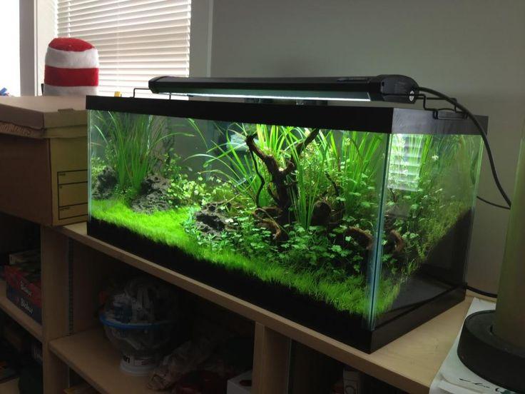Aquarium 30 gallon long aquarium ideas pinterest for 20 gallon fish tank decoration ideas
