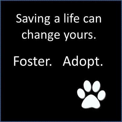 animal for adoption