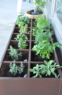 CD rack turned herb garden on the deck! genius!